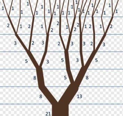 Ce este sirul lui Fibonacci?